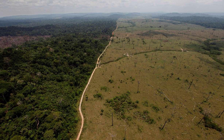Deforestación puede ser origen de sequía en Brasil