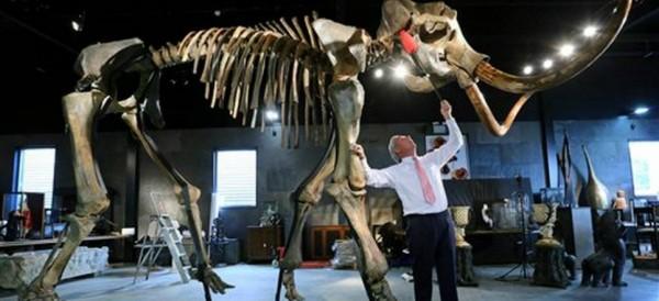 Subastan esqueleto de mamut en 298 mil dólares